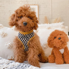 The New Most Popular Dog Breed In New York Is...