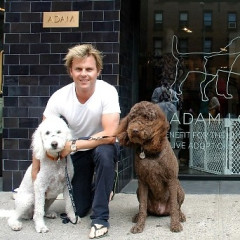 Meatpacking District Boutique Goes To The Dogs