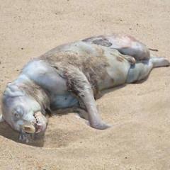 Headless Body Joins The List Of Creepy Hamptons' Shore Wash Ups