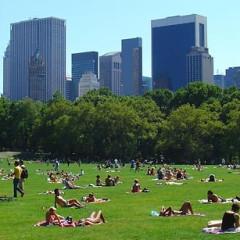 Where To Sunbathe In New York!