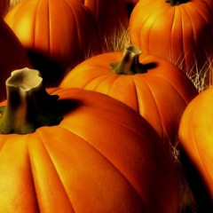Where To Get Your Pumpkin Fix In NYC