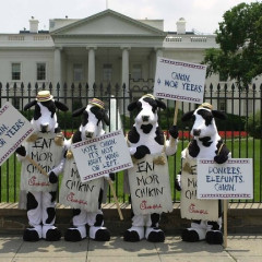 Gray Stands Against Chick-Fil-A