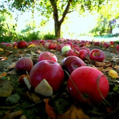 Branching Out: Pumpkin And Apple Picking Near NYC