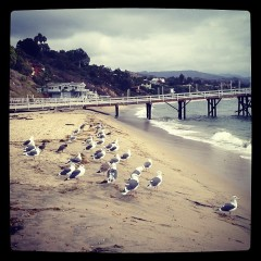 Photo Of The Day: A Lazy Flock Of Seagulls, Obviously In Malibu