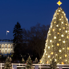 Ticket Lottery For 2012 National Christmas Tree Lighting Ceremony Is Live