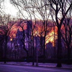 Photo Of The Day: 5th Avenue Sunset