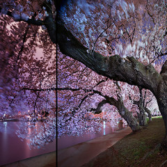 Celebrate The Cherry Blossom Season With These Local Parties And Specials