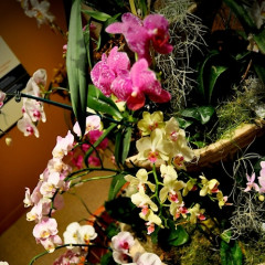 Orchids Of Latin America At The Smithsonian