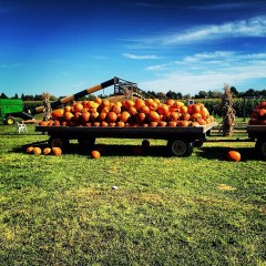 Get In The Fall Spirit With Apple and Pumpkin Picking Spots Near NYC