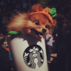 Photo Round Up: The 23rd Annual Tompkins Square Park Halloween Dog Parade