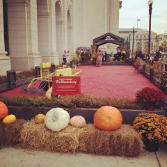 Instagram Of The Day: Cranberry Bog...Outside Of Union Station?