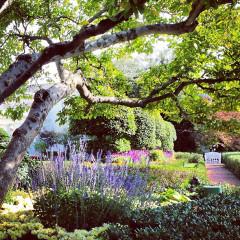 Instagram Of The Day: White House Garden Tour