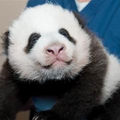 Cuteness Alert: It's Time To Name That Panda!