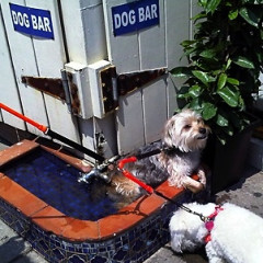 Dine With Your Dog: 5 Pup-Friendly Restaurants In NYC