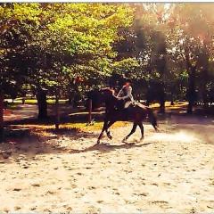 Saddle Up: 5 Amazing Horseback Riding Spots In & Around NYC