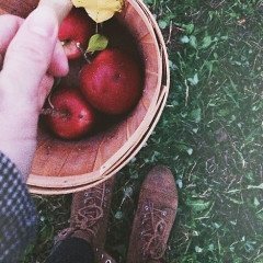 Apple Picking Near NYC: The Best Spots For Every Type Of Day Trip
