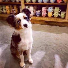 National Dog Day: Pet-Friendly Shopping In NYC