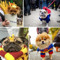 The Cutest Costumed Pups From The 25th Annual Tompkins Square Park Halloween Dog Parade